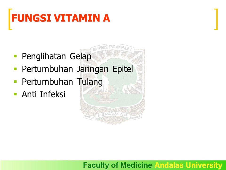  Sumber vitamin D :  lemak ikan. minyak ikan.  susu.