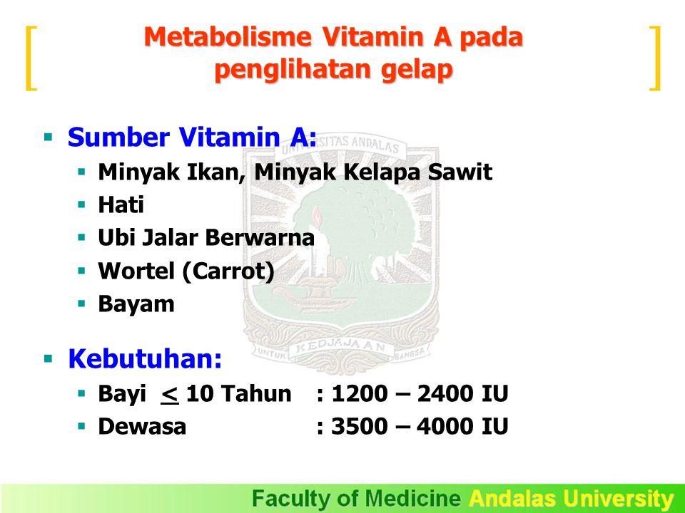 Metabolisme Vitamin A pada penglihatan gelap  Sumber Vitamin A:  Minyak Ikan, Minyak Kelapa Sawit  Hati  Ubi Jalar Berwarna  Wortel (Carrot)  Ba