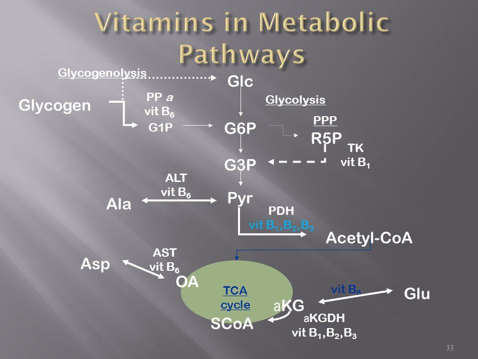 33 Glycolysis TCA cycle Glycogenolysis a KGDH vit B 1,B 2,B 3 PP a vit B 6 Glc Glycogen G1P R5P TK vit B 1 PDH vit B 1,B 2,B 3 a KG SCoAAcetyl-CoA G6P Pyr G3P ALT vit B 6 Ala AST vit B 6 OA Asp vit B 6 Glu PPP