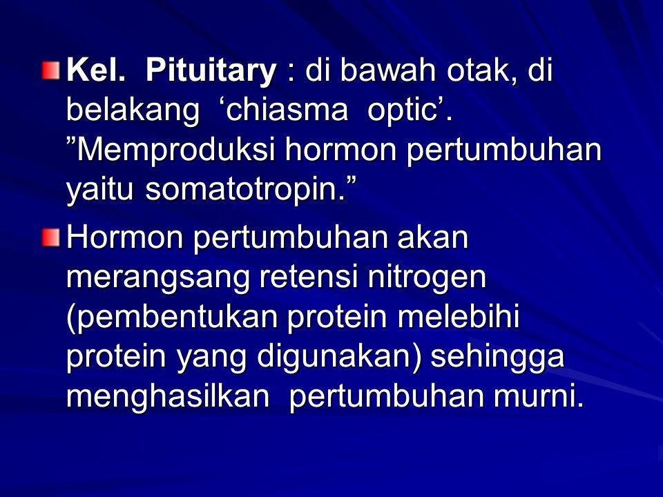 """Kel. Pituitary : di bawah otak, di belakang 'chiasma optic'. """"Memproduksi hormon pertumbuhan yaitu somatotropin."""" Hormon pertumbuhan akan merangsang r"""