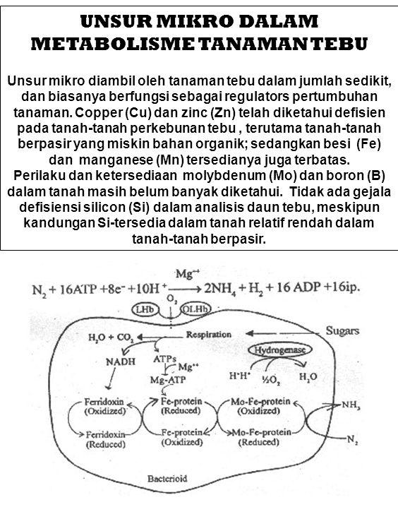 MAGNESIUM BAGI TEBU Klorofil adalah molekul yang mampu menangkap photon dan disebut sebagai photo-receptor.