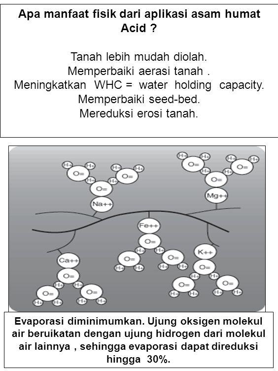 MEMINIMUMKAN ABSORPSI & IMOBILISASI P TANAH Ada beberapa cara praktis untuk mengurangi kehilangan P dalam tanah.