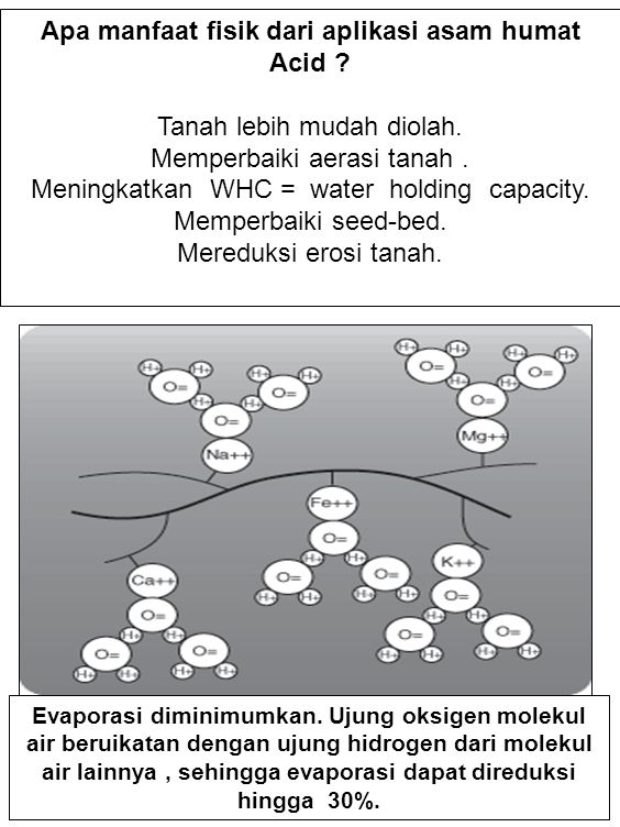 KEHILANGAN PUPUK N TANAMAN TEBU Kehilangan pupuk N dari lahan tebu dapat terjadi karena menguapan ammonia setelah pupuk N diaplikasikan ke tanah.
