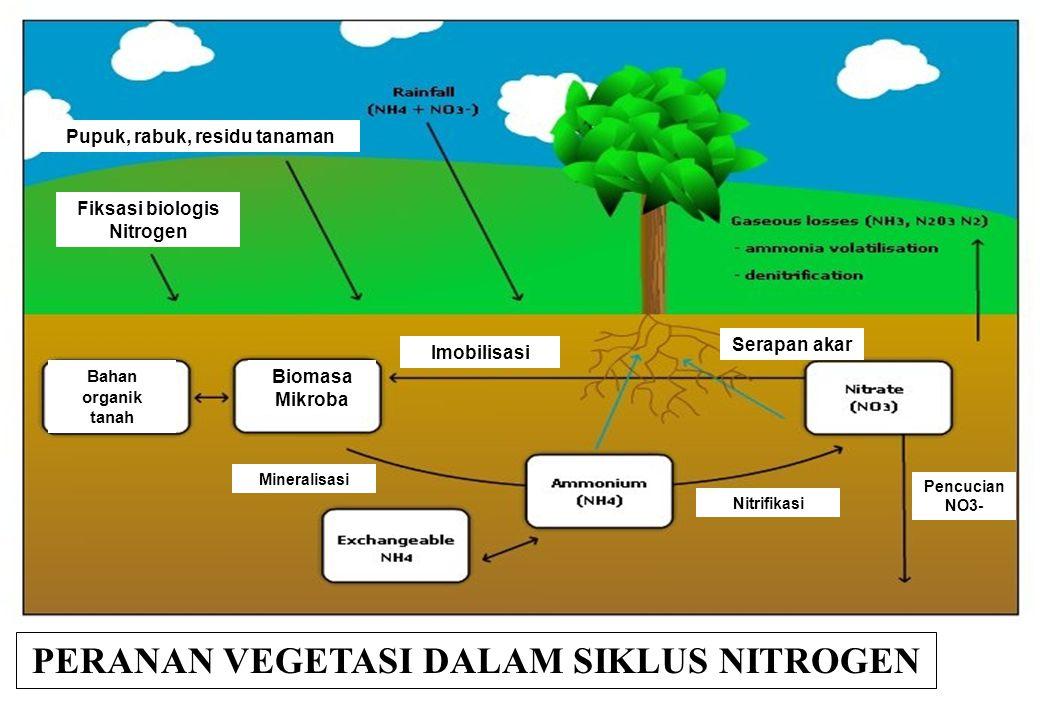 PERANAN VEGETASI DALAM SIKLUS NITROGEN Imobilisasi Serapan akar Pupuk, rabuk, residu tanaman Fiksasi biologis Nitrogen Biomasa Mikroba Bahan organik tanah Pencucian NO3- Nitrifikasi Mineralisasi