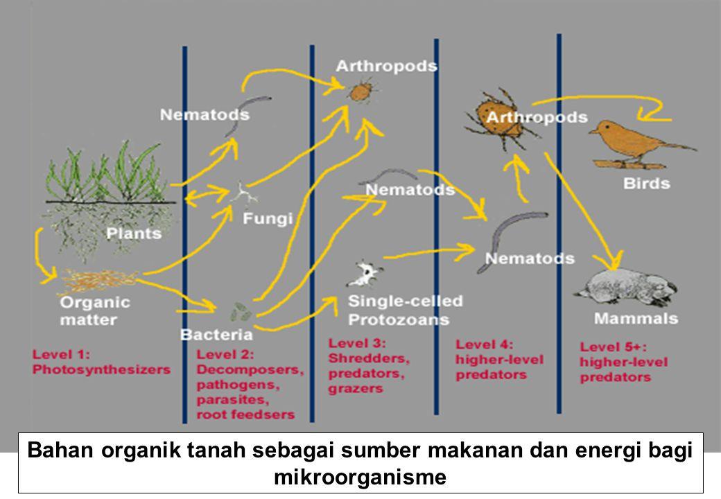 Bahan organik tanah sebagai sumber makanan dan energi bagi mikroorganisme