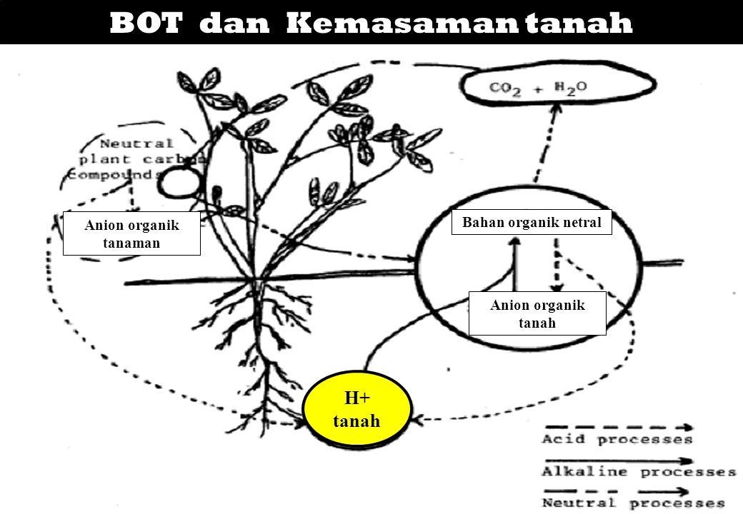 BOT dan Kemasaman tanah H+ tanah Anion organik tanah Bahan organik netral Anion organik tanaman