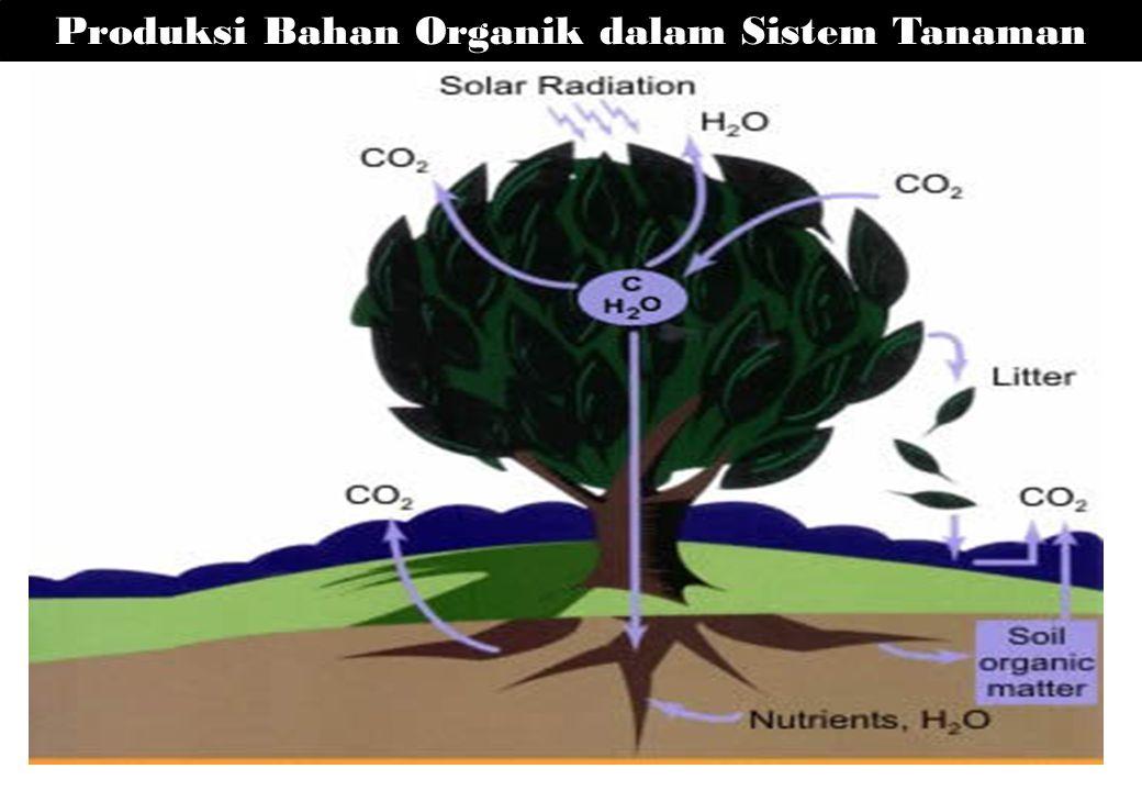 Produksi Bahan Organik dalam Sistem Tanaman
