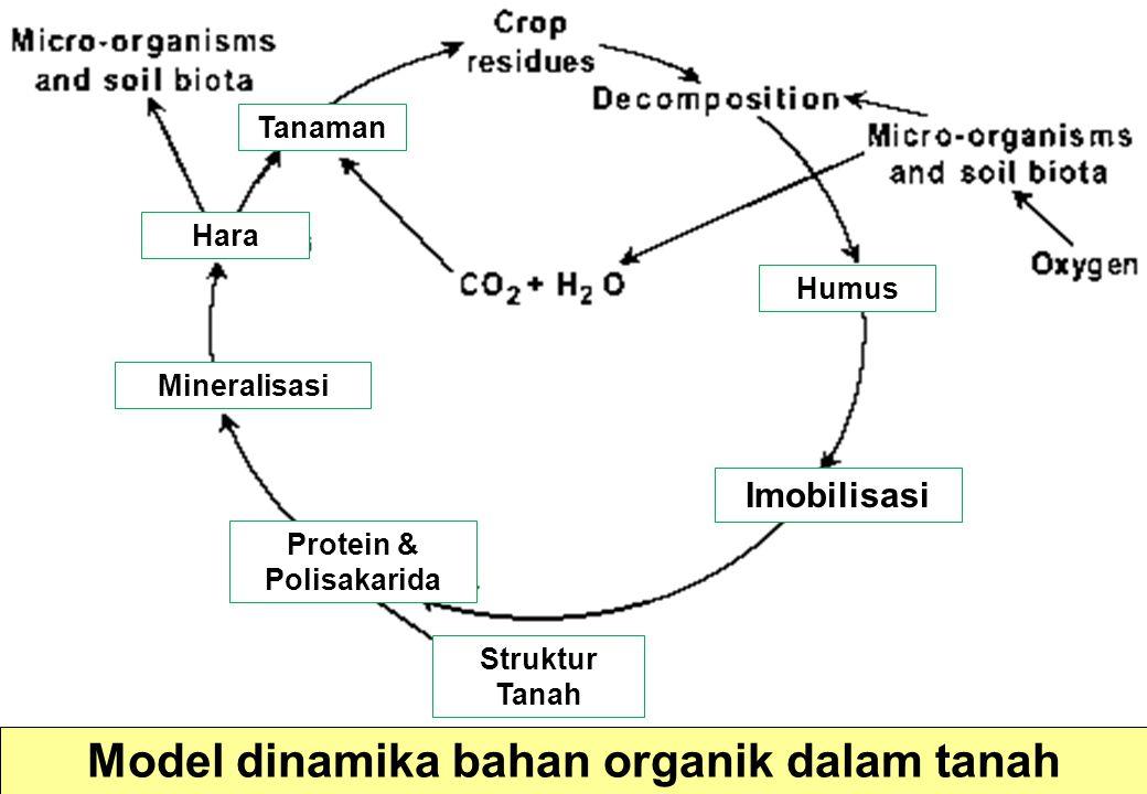 Model dinamika bahan organik dalam tanah Imobilisasi Struktur Tanah Hara Mineralisasi Protein & Polisakarida Humus Tanaman