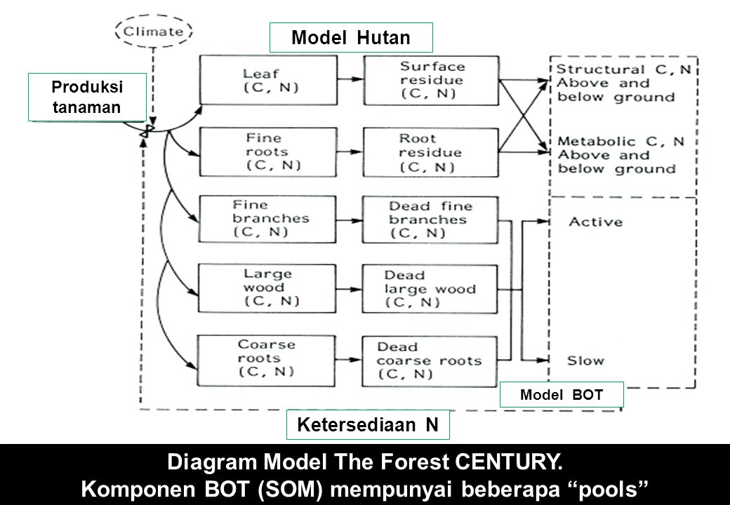 Diagram Model The Forest CENTURY.