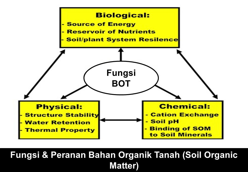Fungsi & Peranan Bahan Organik Tanah (Soil Organic Matter) Fungsi BOT