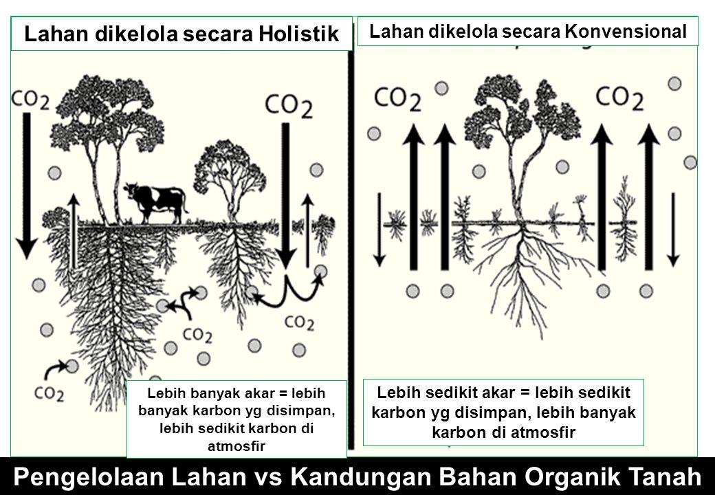 Pengelolaan Lahan vs Kandungan Bahan Organik Tanah Lahan dikelola secara Holistik Lahan dikelola secara Konvensional Lebih sedikit akar = lebih sedikit karbon yg disimpan, lebih banyak karbon di atmosfir Lebih banyak akar = lebih banyak karbon yg disimpan, lebih sedikit karbon di atmosfir