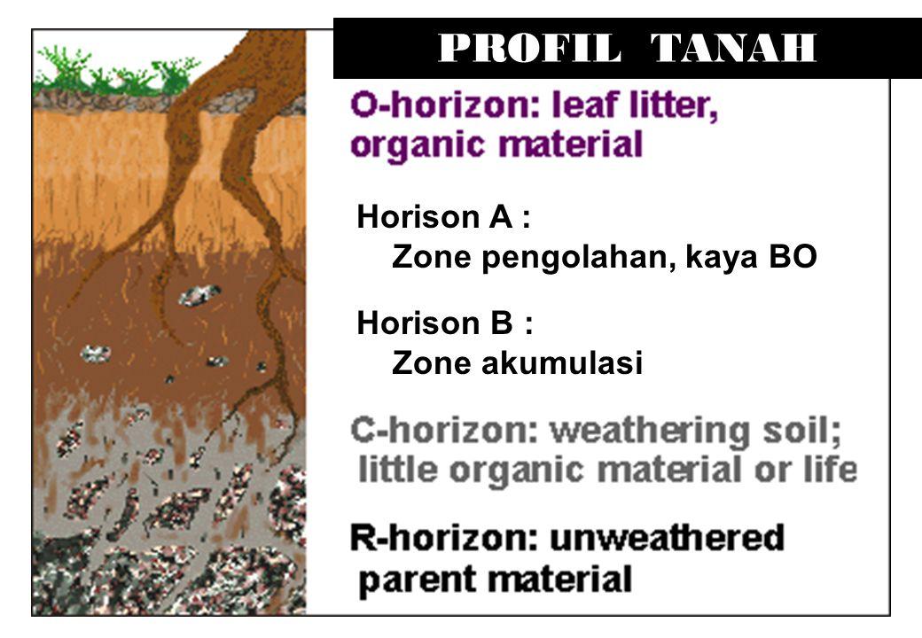 PROFIL TANAH Horison B : Zone akumulasi Horison A : Zone pengolahan, kaya BO