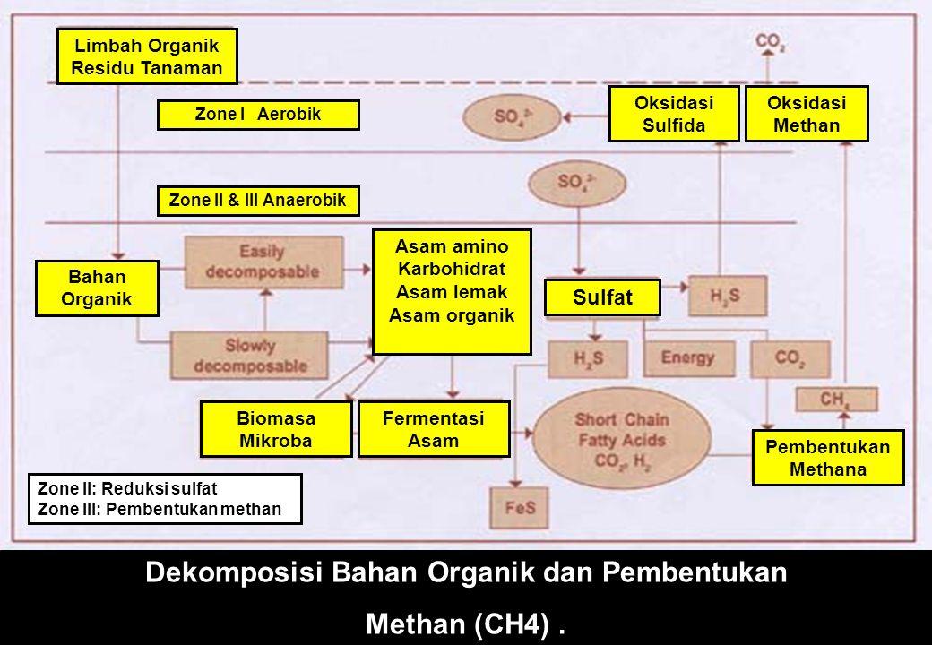 Dekomposisi Bahan Organik dan Pembentukan Methan (CH4).