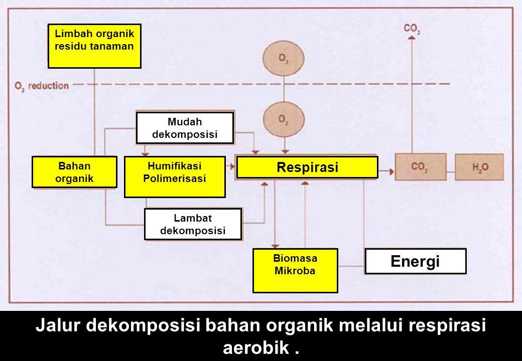Jalur dekomposisi bahan organik melalui respirasi aerobik.