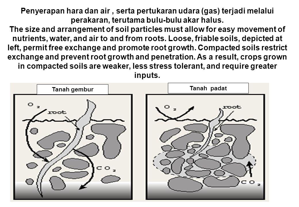 Penyerapan hara dan air, serta pertukaran udara (gas) terjadi melalui perakaran, terutama bulu-bulu akar halus.