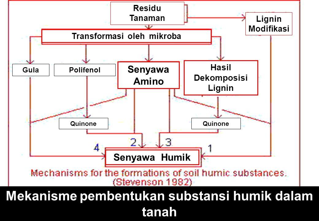 Mekanisme pembentukan substansi humik dalam tanah Lignin Modifikasi Residu Tanaman Transformasi oleh mikroba Senyawa Amino Senyawa Humik Hasil Dekomposisi Lignin GulaPolifenol Quinone