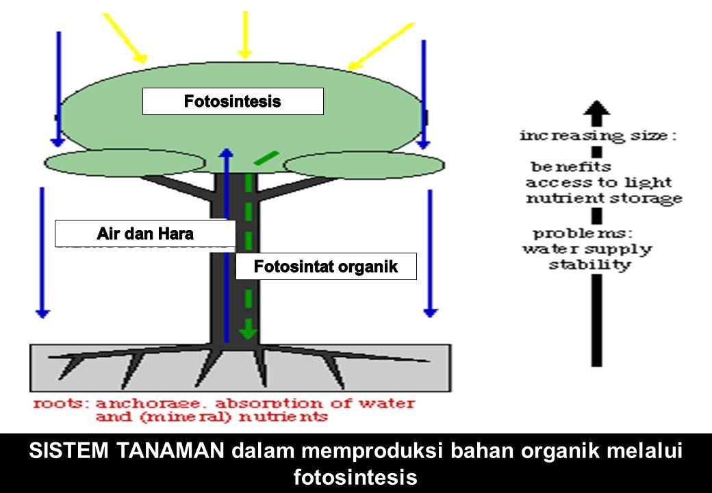 SISTEM TANAMAN dalam memproduksi bahan organik melalui fotosintesis