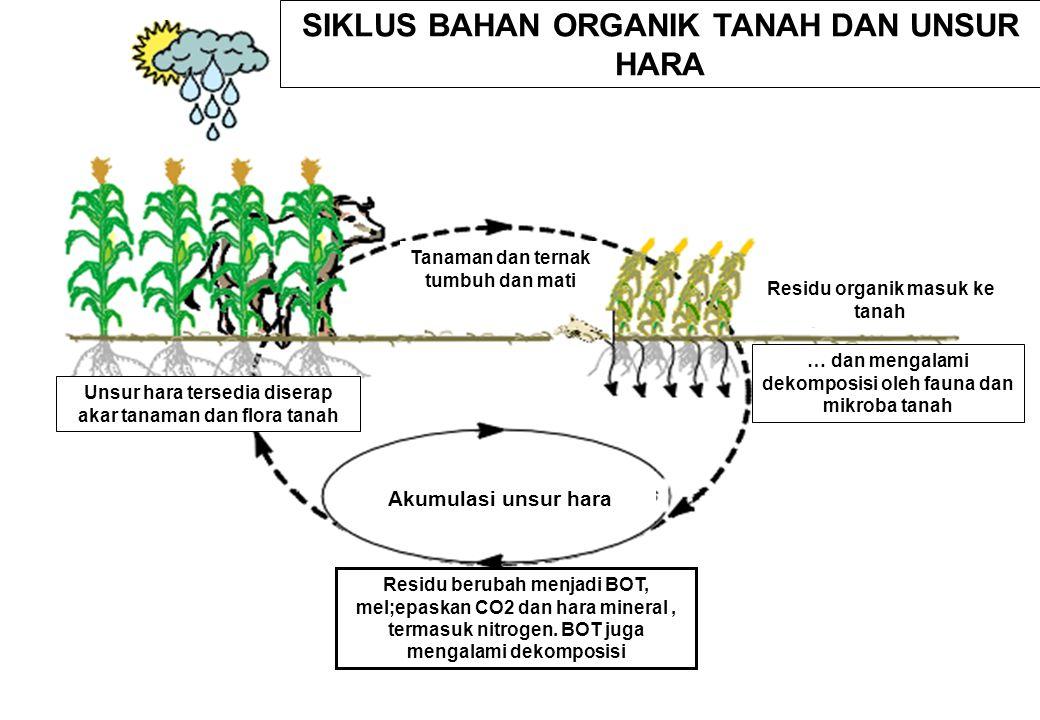 Jalur dekomposisi bahan organik melalui respirasi Fakultatif.