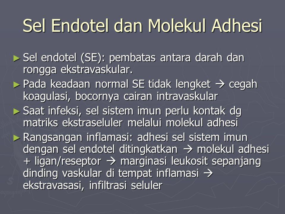 Sel Endotel dan Molekul Adhesi ► Sel endotel (SE): pembatas antara darah dan rongga ekstravaskular. ► Pada keadaan normal SE tidak lengket  cegah koa
