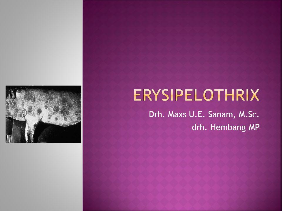  Erysipelothrix adalah bagian dari kelompok bakteri batang Gram positif (sangat mirip dengan Listeria)  Patogen penting pada babi, menyebabkan penyakit unik Diamond Skin Disease (Penyakit kulit berlian).