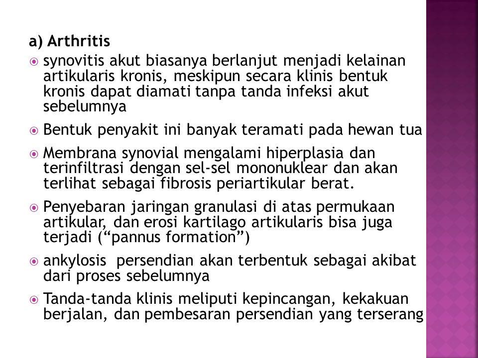 a) Arthritis  synovitis akut biasanya berlanjut menjadi kelainan artikularis kronis, meskipun secara klinis bentuk kronis dapat diamati tanpa tanda i