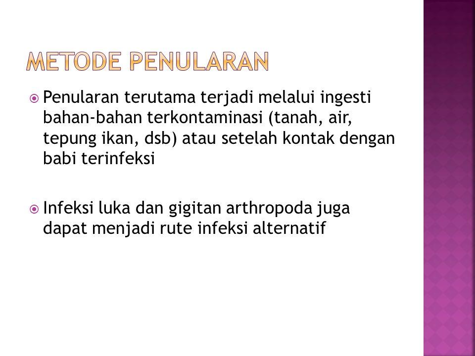 I) Faktor Virulensi a) Neuraminidase  Strain-strain E.