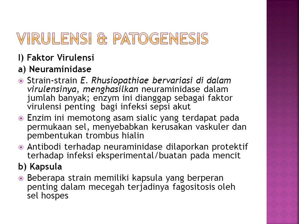 I) Faktor Virulensi a) Neuraminidase  Strain-strain E. Rhusiopathiae bervariasi di dalam virulensinya, menghasilkan neuraminidase dalam jumlah banyak