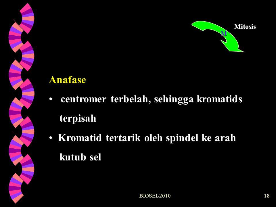 BIOSEL 201018 M Mitosis Anafase centromer terbelah, sehingga kromatids terpisah Kromatid tertarik oleh spindel ke arah kutub sel
