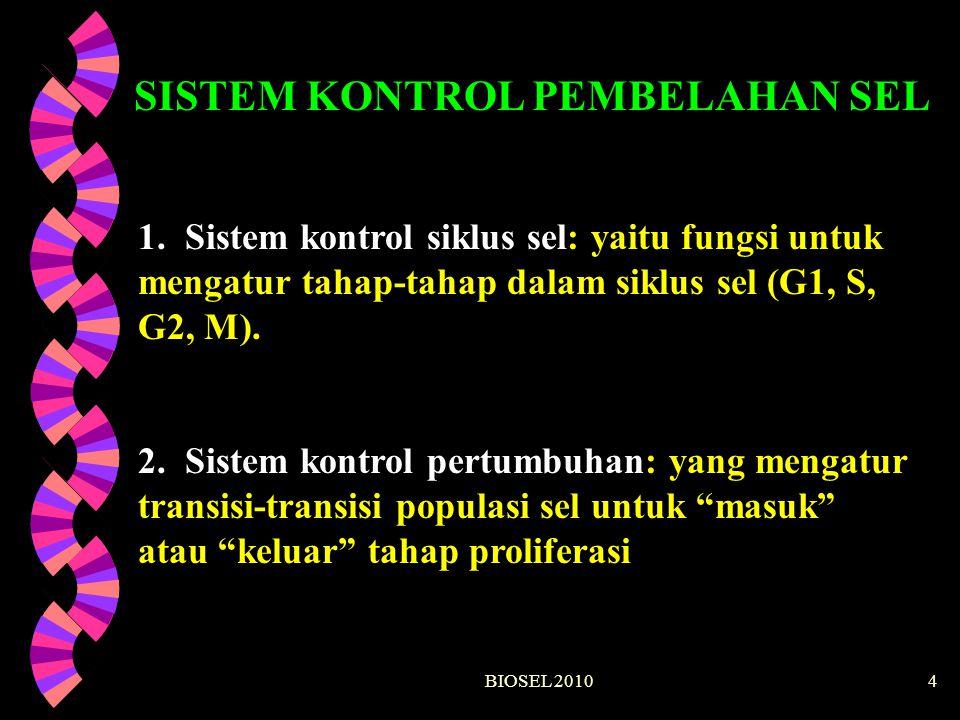 BIOSEL 201015 G2 cdc2 CyclinB cdc2 CyclinB cdc2 CyclinB cdc2 inactive active CAK PO 4 inactive