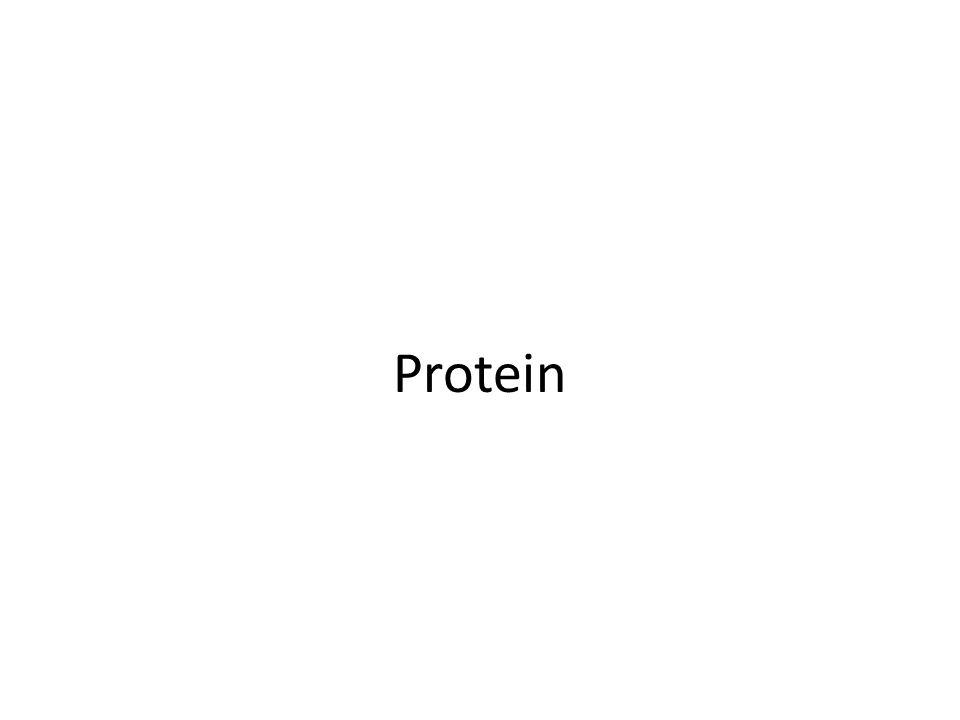 Pendahuluan Kata protein diperkenalkan Gerardus Mulder (1802- 1880): Proteos (Yuniani) yang utama atau yang didahulukan.
