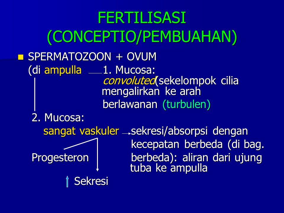 FERTILISASI (CONCEPTIO/PEMBUAHAN) SPERMATOZOON + OVUM SPERMATOZOON + OVUM (di ampulla1. Mucosa: convoluted(sekelompok cilia mengalirkan ke arah berlaw