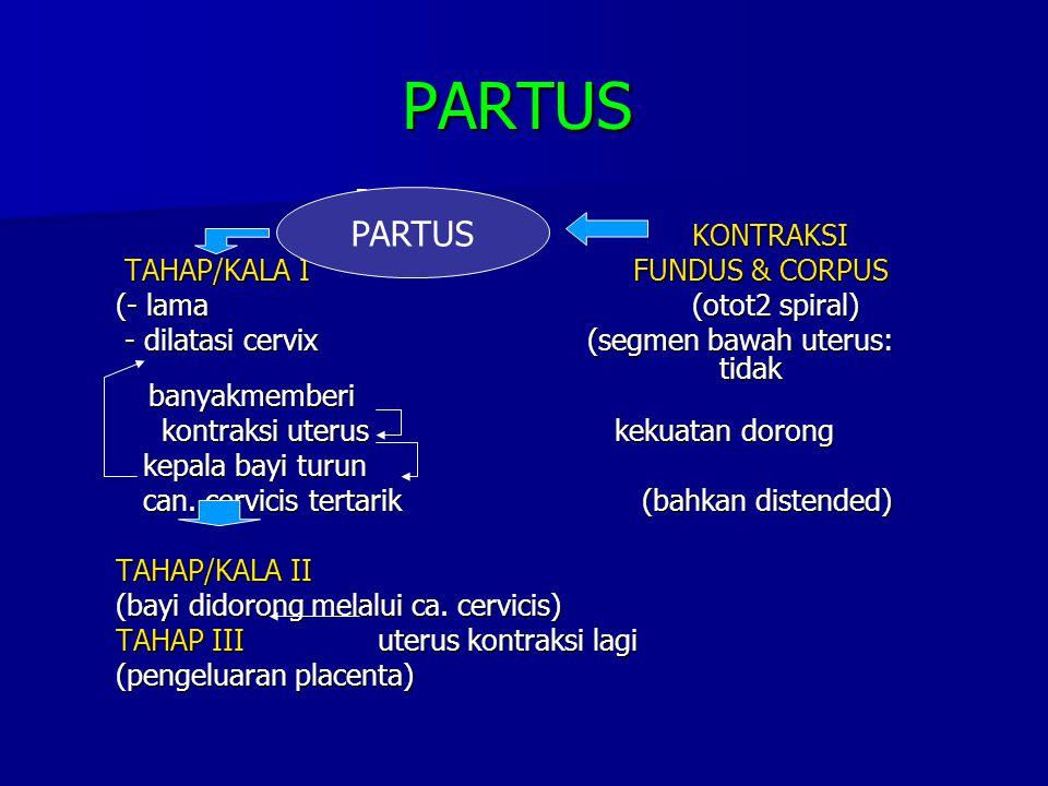 PARTUS PARTUS (KELAHIRAN BAYI)KONTRAKSI (KELAHIRAN BAYI)KONTRAKSI TAHAP/KALA I FUNDUS & CORPUS TAHAP/KALA I FUNDUS & CORPUS (- lama(otot2 spiral) - di