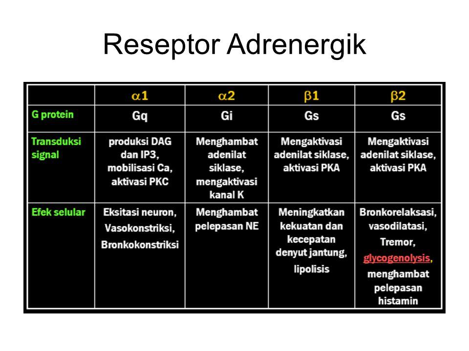 Reseptor Adrenergik