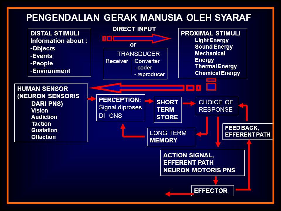 SUSUNAN SYARAF MANUSIA 1.SUSUNAN SYARAF PUSAT (CENTRAL NERVOUS SYSTEM) SUSUNAN SYARAF TEPI (PERIPHERAL NERVOUS SYSTEMS) URAT SYARAF 1.