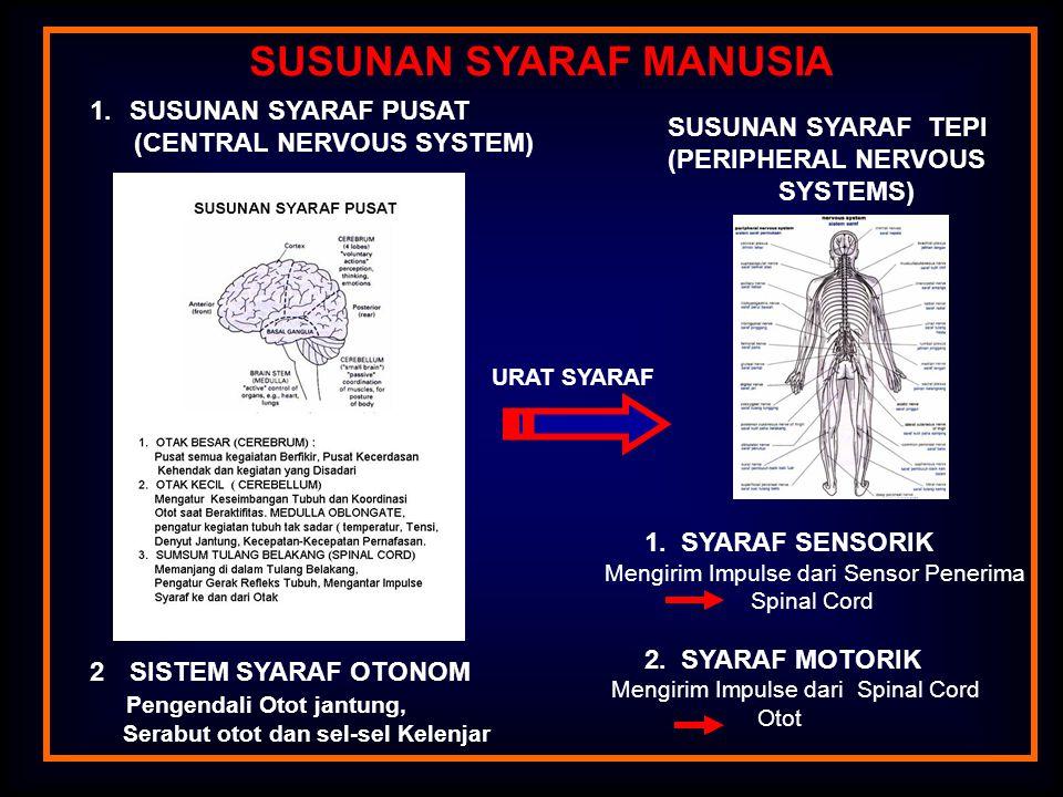 A = SYARAF MOTORIS B = SYARAF SENSORIS C = SAMBUNGAN PADA SPINAL CORD AB Axon Terminal Branch Cell Body Dendriles Axon Cell Body Peripheral Fiber Mucles Skin Anterior Root Posterior Root C Spinal Ganglion NEURON MOTOR NEURON SENSORIS NEURON (Unit Pembentuk Sistem Syaraf) Axon Neuron yang dikelompokkan ke dalam Jaringan Pengikat Serabut Syaraf yang Berakhir pada sumsum Tulang Belakang (Spinal Cord).