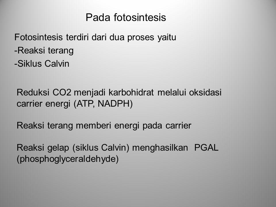 Reduksi CO2 menjadi karbohidrat melalui oksidasi carrier energi (ATP, NADPH) Reaksi terang memberi energi pada carrier Reaksi gelap (siklus Calvin) me