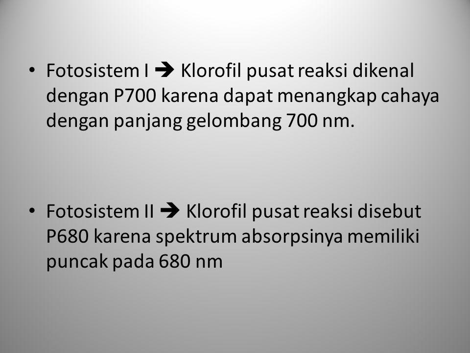 Fotosistem I  Klorofil pusat reaksi dikenal dengan P700 karena dapat menangkap cahaya dengan panjang gelombang 700 nm. Fotosistem II  Klorofil pusat