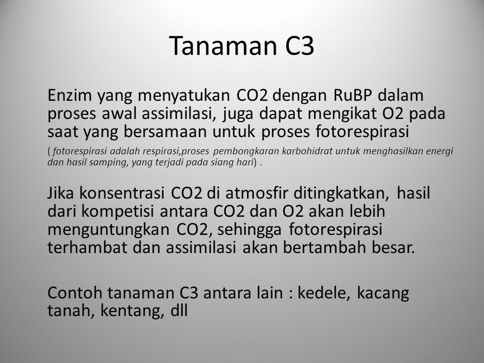 Tanaman C3 Enzim yang menyatukan CO2 dengan RuBP dalam proses awal assimilasi, juga dapat mengikat O2 pada saat yang bersamaan untuk proses fotorespir