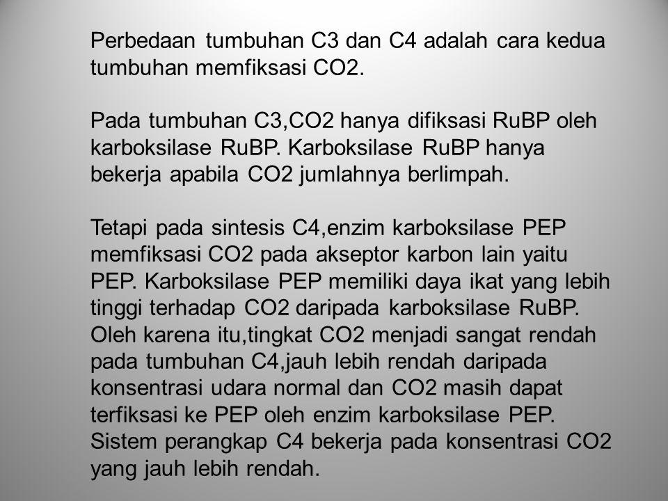 Perbedaan tumbuhan C3 dan C4 adalah cara kedua tumbuhan memfiksasi CO2. Pada tumbuhan C3,CO2 hanya difiksasi RuBP oleh karboksilase RuBP. Karboksilase