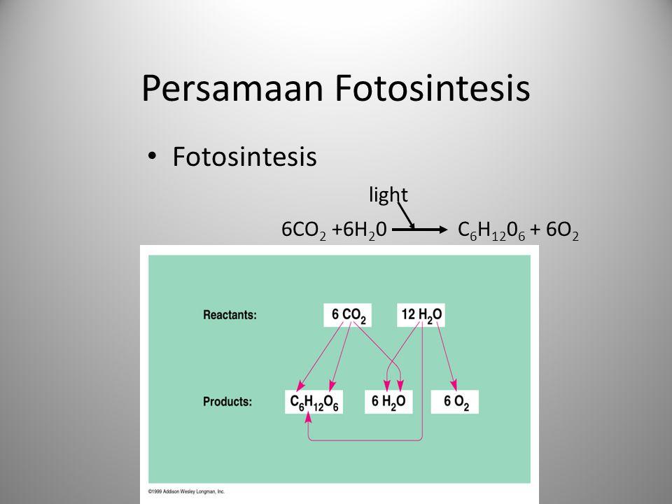 Persamaan Fotosintesis Fotosintesis light 6CO 2 +6H 2 0 C 6 H 12 0 6 + 6O 2
