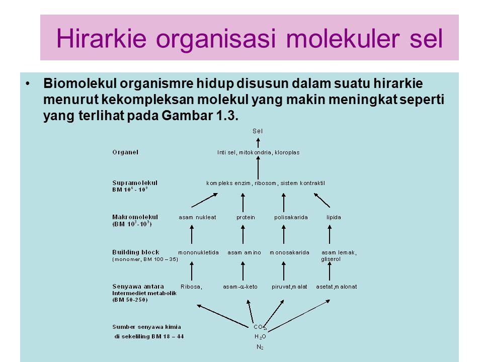 Hirarkie organisasi molekuler sel Biomolekul organismre hidup disusun dalam suatu hirarkie menurut kekompleksan molekul yang makin meningkat seperti y