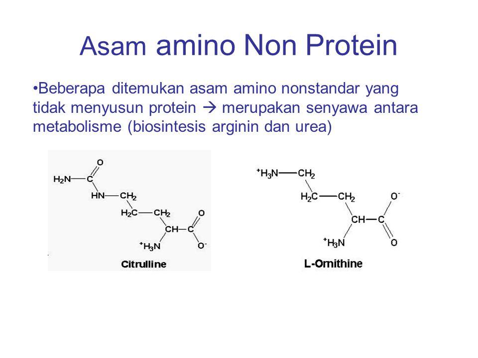 Asam amino Non Protein Beberapa ditemukan asam amino nonstandar yang tidak menyusun protein  merupakan senyawa antara metabolisme (biosintesis argini