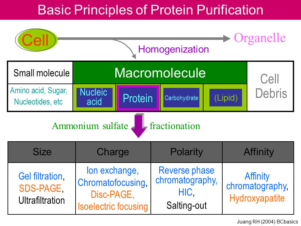 Basic Principles of Protein Purification Ammonium sulfate fractionation Cell Organelle Homogenization Macromolecule Nucleic acid Carbohydrate (Lipid)