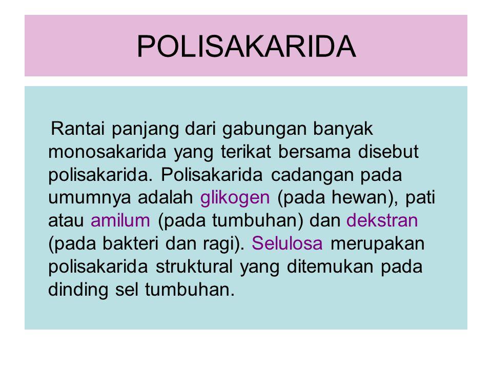 POLISAKARIDA Rantai panjang dari gabungan banyak monosakarida yang terikat bersama disebut polisakarida. Polisakarida cadangan pada umumnya adalah gli