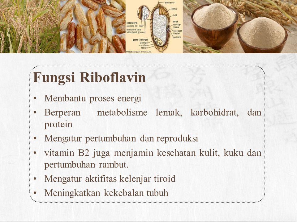 Fungsi Riboflavin Membantu proses energi Berperan metabolisme lemak, karbohidrat, dan protein Mengatur pertumbuhan dan reproduksi vitamin B2 juga menj
