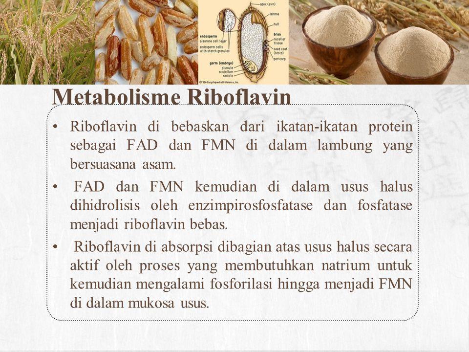 Metabolisme Riboflavin Riboflavin di bebaskan dari ikatan-ikatan protein sebagai FAD dan FMN di dalam lambung yang bersuasana asam. FAD dan FMN kemudi