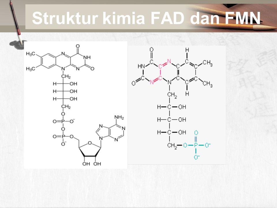 Struktur kimia FAD dan FMN