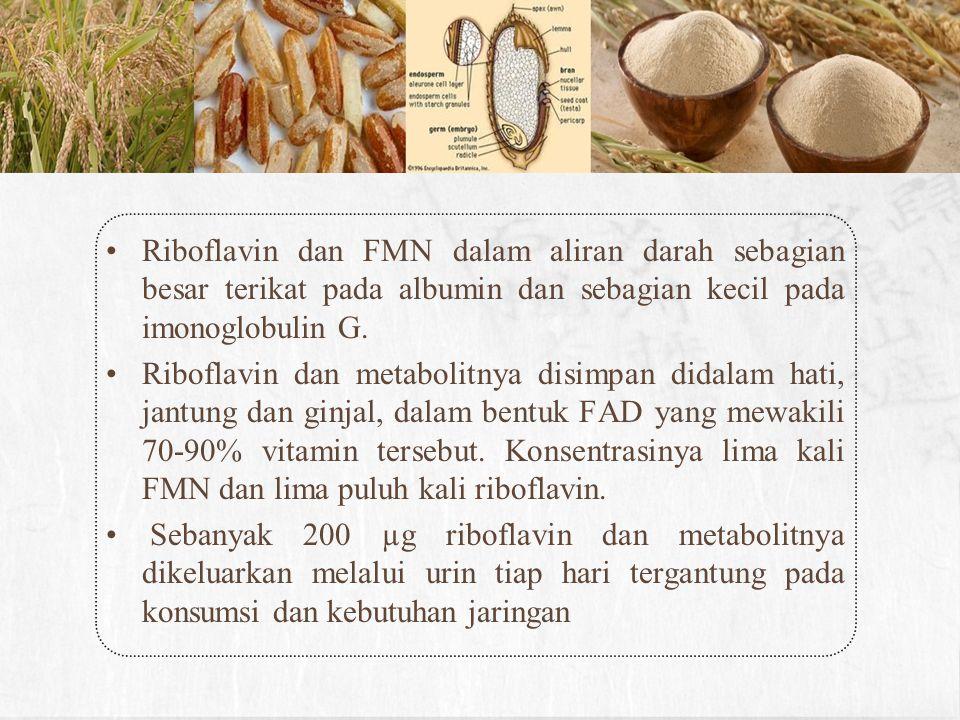 Riboflavin dan FMN dalam aliran darah sebagian besar terikat pada albumin dan sebagian kecil pada imonoglobulin G. Riboflavin dan metabolitnya disimpa
