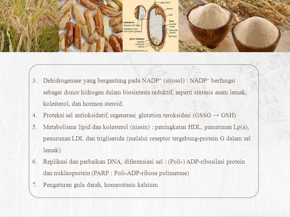 3.Dehidrogenase yang bergantung pada NADP + (sitosol) : NADP + berfungsi sebagai donor hidrogen dalam biosintesis reduktif, seperti sintesis asam lema