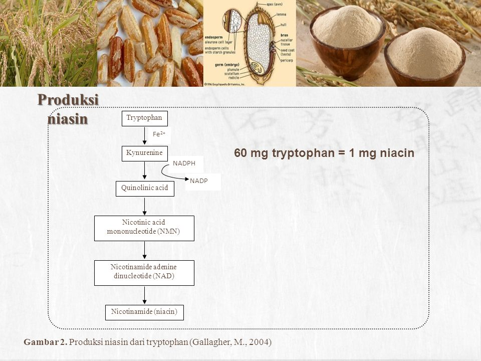 Produksi niasin Tryptophan Kynurenine Quinolinic acid Nicotinic acid mononucleotide (NMN) Nicotinamide adenine dinucleotide (NAD) Nicotinamide (niacin